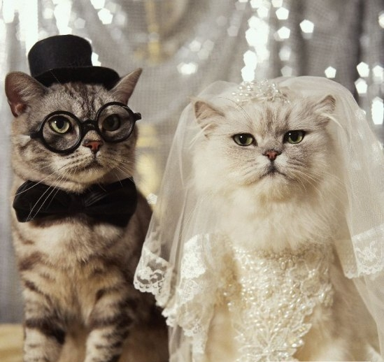 cat_wedding.jpg